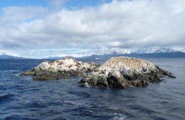Argentina - Ushuaia lobos marinos