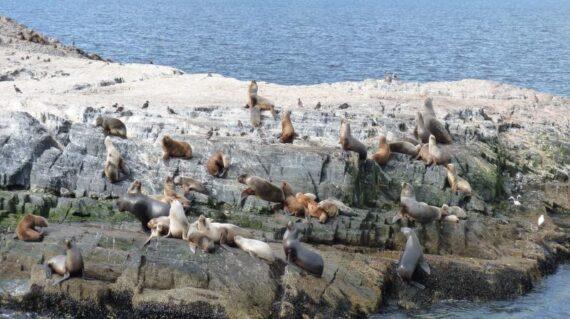 Argentina Ushuaia Leones marinos