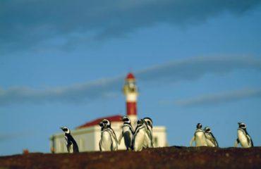 Cruceros Australis isla-magdalena pinguinos