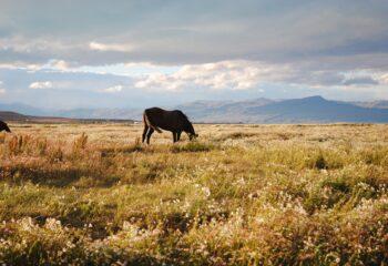 Las mejores cosas para hacer y ver en El Calafate, Argentina